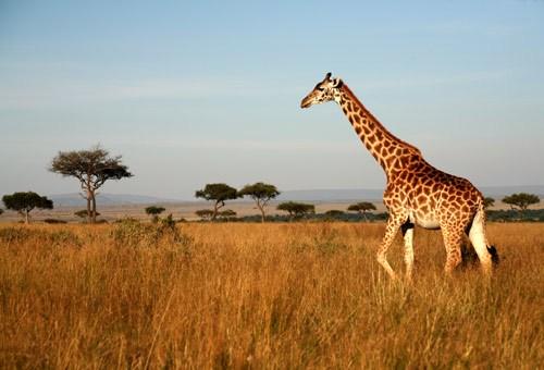 Diaporama «Découverte» – l'Afrique australe