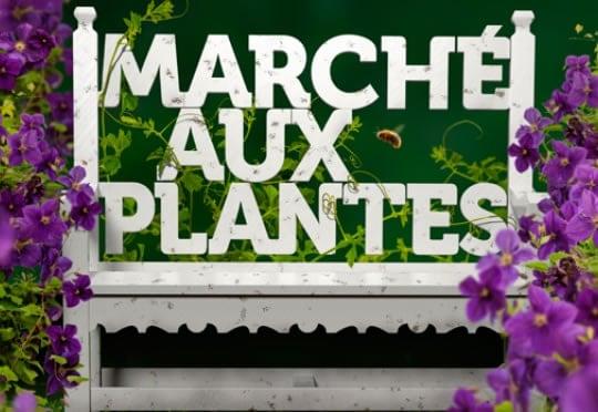 Chaudron Magique – vente de fleurs