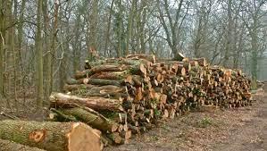 Coupes de bois